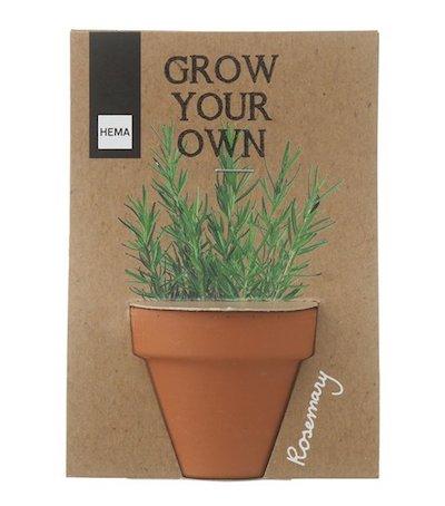 HEMA rosemary growing kit