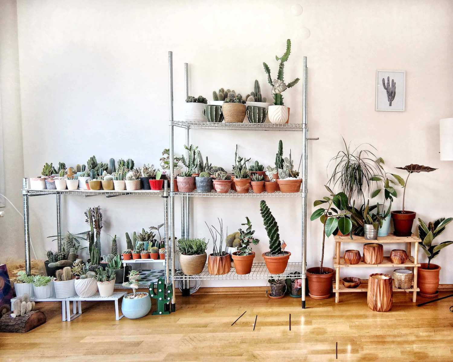The five easiest house plants to look after